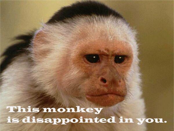 Sorry aapje, ik probeer deze week beter mijn best te doen :(