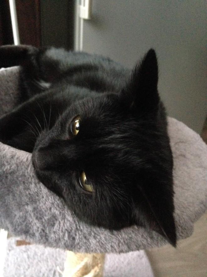 """""""Laat mij gewoon gerust omg kan een kat nu nooit gewoon eens slapen zonder dat het een fotoshoot wordt omg omg."""" (omg is haar stopwoord)"""