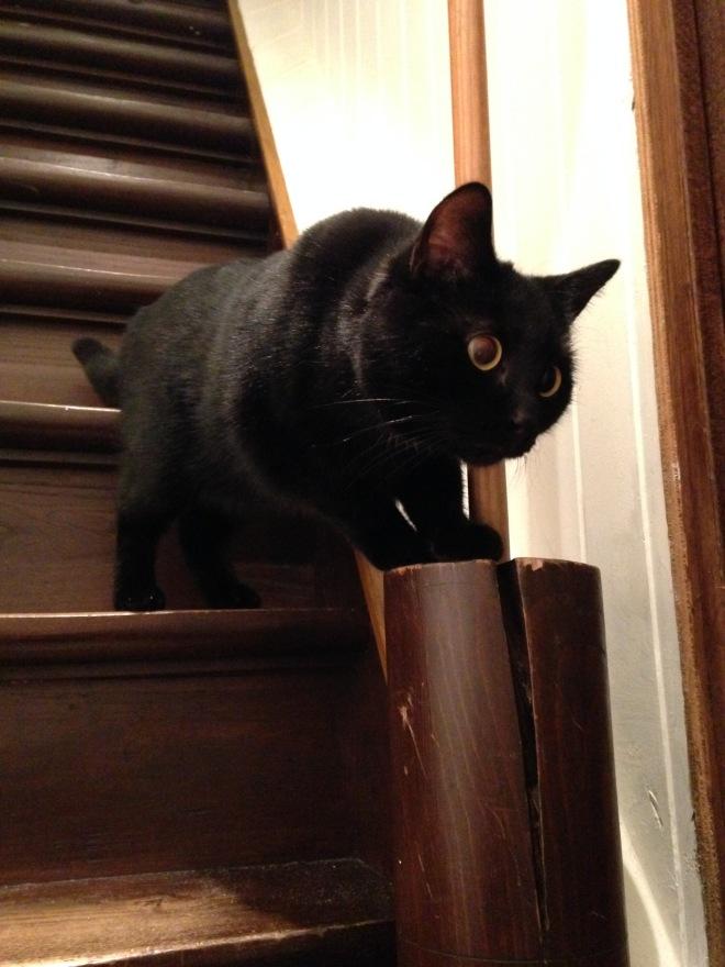 Poes Springsteen de Eerste, koningin van de trap.