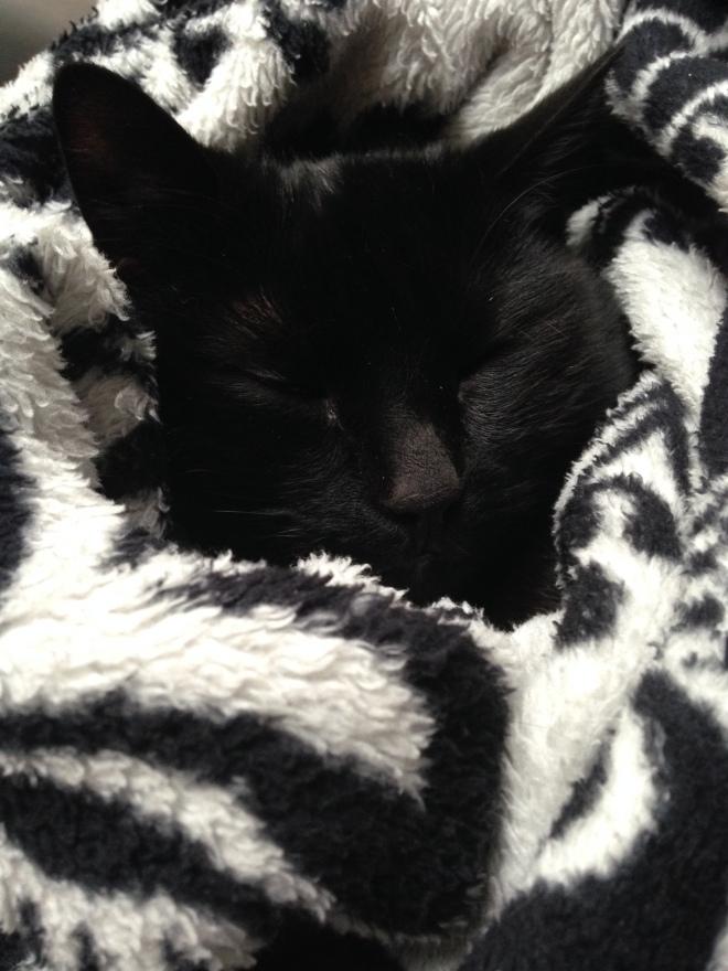 Poes probeert zo diep mogelijk in de dekens te kruipen om zich te verstoppen van Dylan zijn gekrijs.