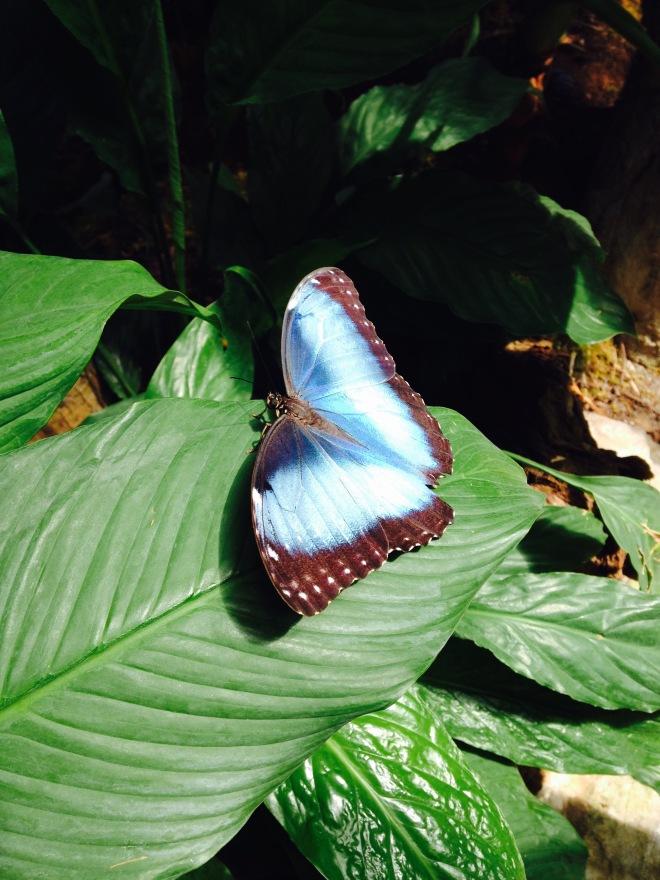 De vlindertuin in de Zoo was ongelofelijk mooi!