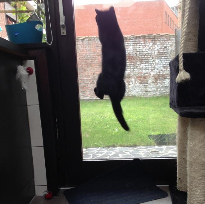 Komt dat zien, komt dat zien, een zwevende kat!