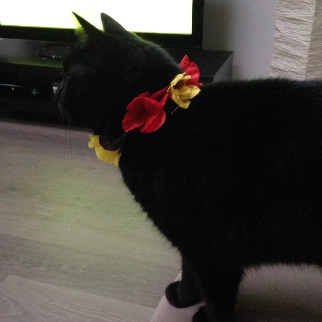 En een niet-bewogen-foto maken van een kat met een slinger rond haar nek is nog moeilijker.